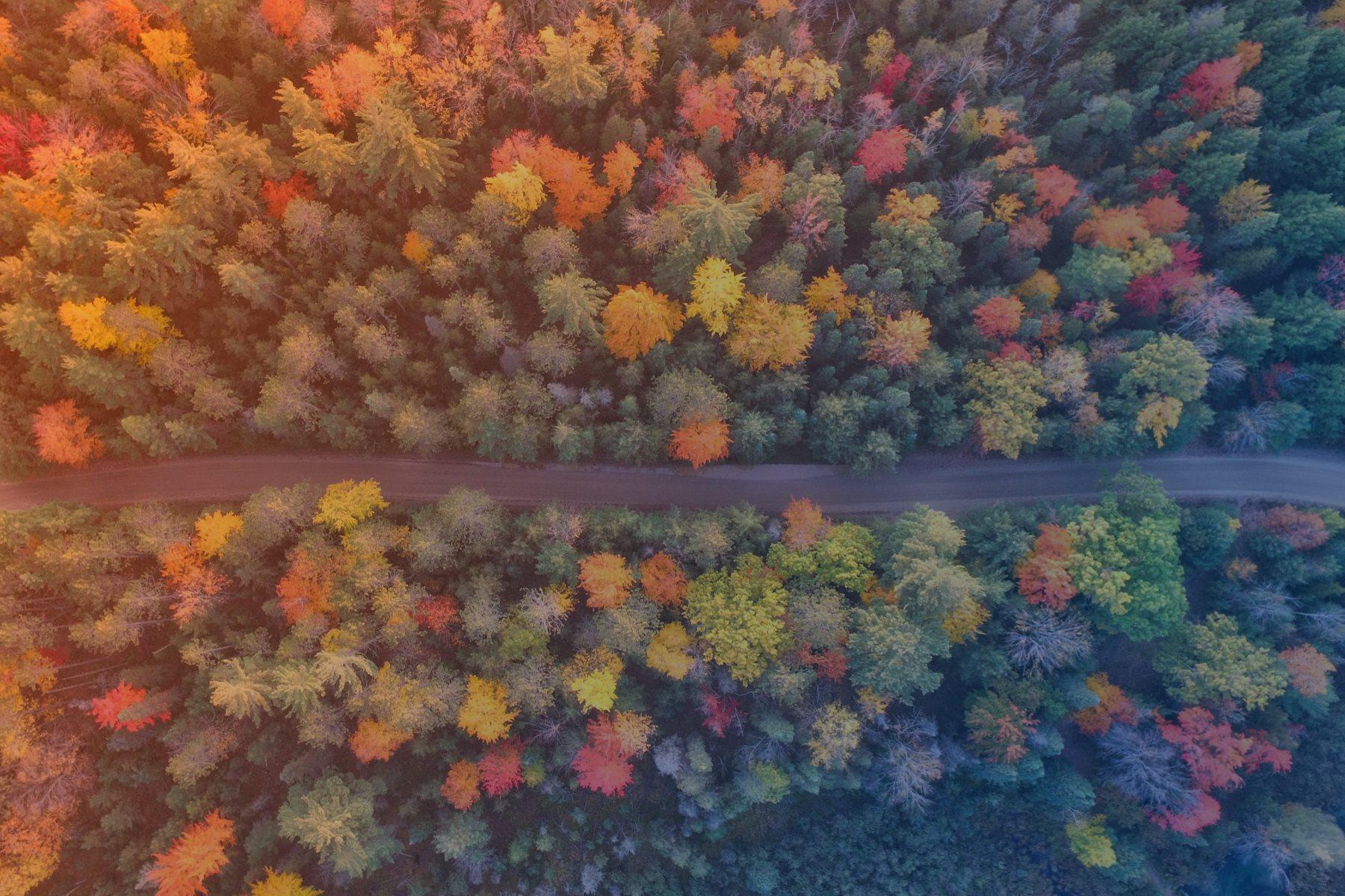 Afbeelding bomen
